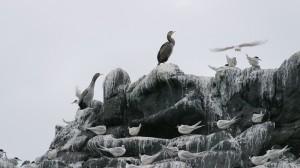 Greymouth – Akaroa