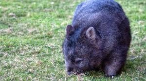 Der Norden Tasmaniens